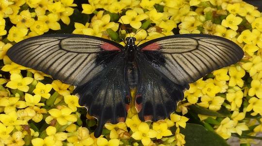 Vivez l exp rience papillons en f te appartements de for Jardin hamel papillon 2016